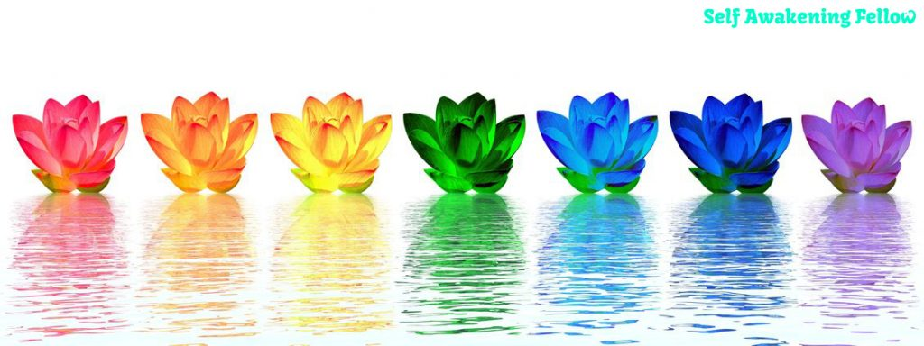 11266707 - chakra colors of lily flower upon water in white background